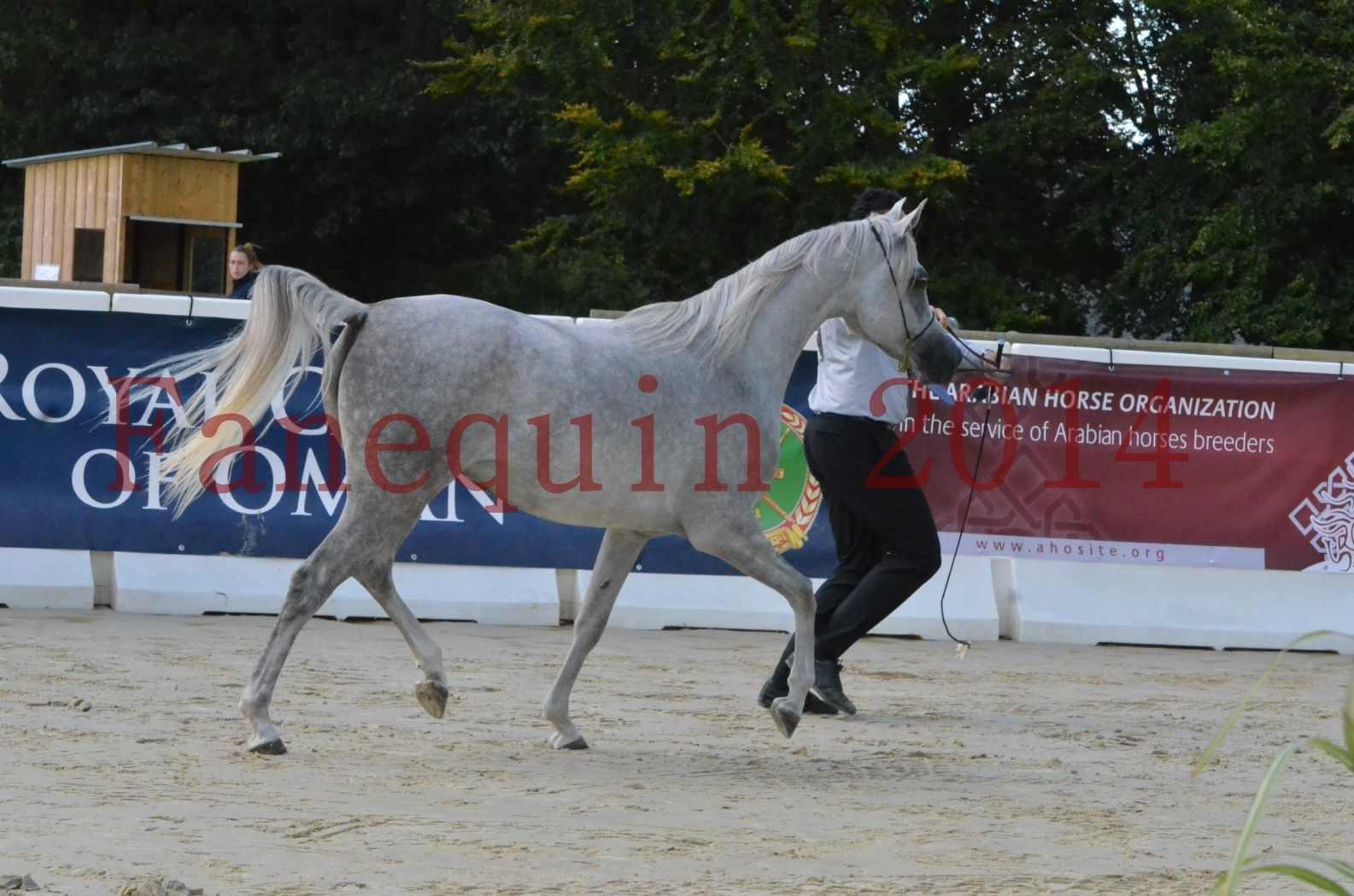 Championnat de FRANCE 2014 - Amateurs - VOLODIA DE LAFON - 005