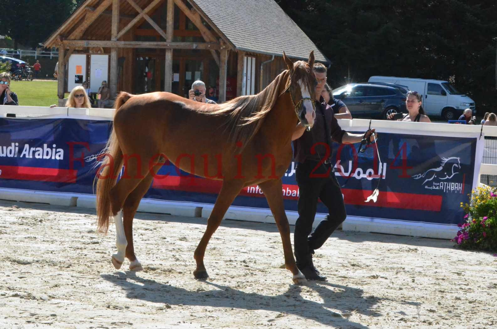 Championnat de FRANCE 2014 - Amateurs - SELECTO IBN SAMAWI - 021