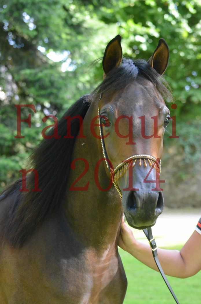 Championnat de FRANCE 2014 - Amateurs - SH FARAJAA - 104