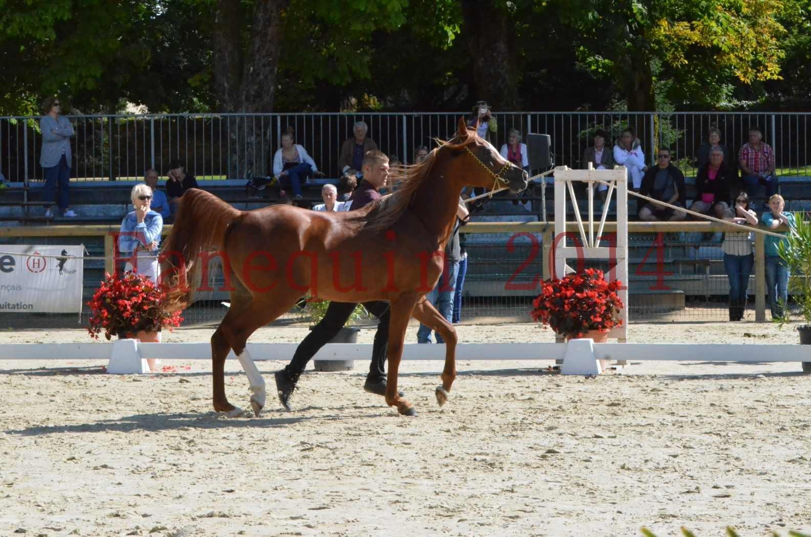 Championnat de FRANCE 2014 - Amateurs - SELECTO IBN SAMAWI - 001