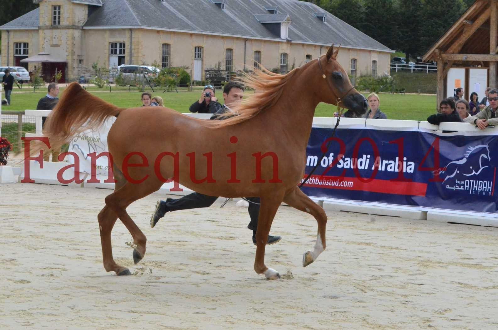 CHAMPIONNAT DE FRANCE 2014 A POMPADOUR - Sélection - LUTFINAH JA - 09