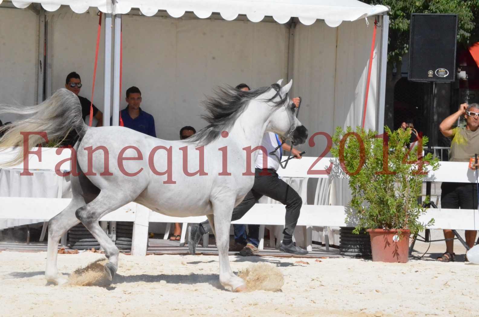 Concours National de Nîmes de chevaux ARABES 2014 - Sélection - SHAOLIN DE NEDJAIA - 23