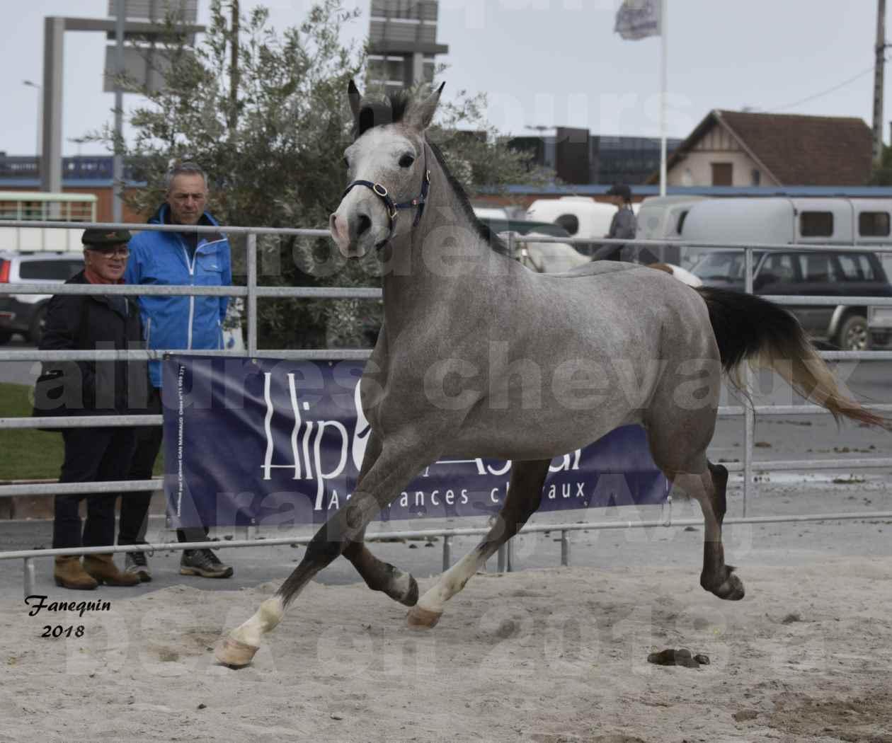 Concours d'élevage de Chevaux Arabes - D. S. A. - A. A. - ALBI les 6 & 7 Avril 2018 - FESIHAMKA ARTAGNAN - Notre Sélection - 7