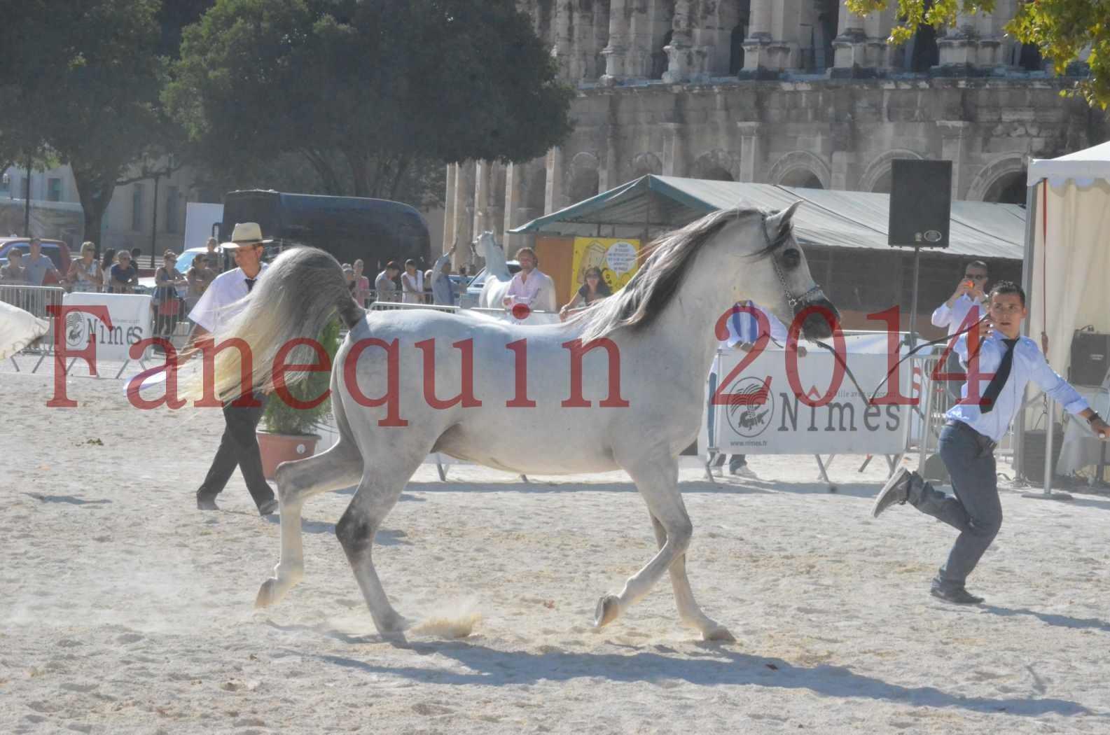 Concours National de Nîmes de chevaux ARABES 2014 - Championnat - SHAOLIN DE NEDJAIA - 09