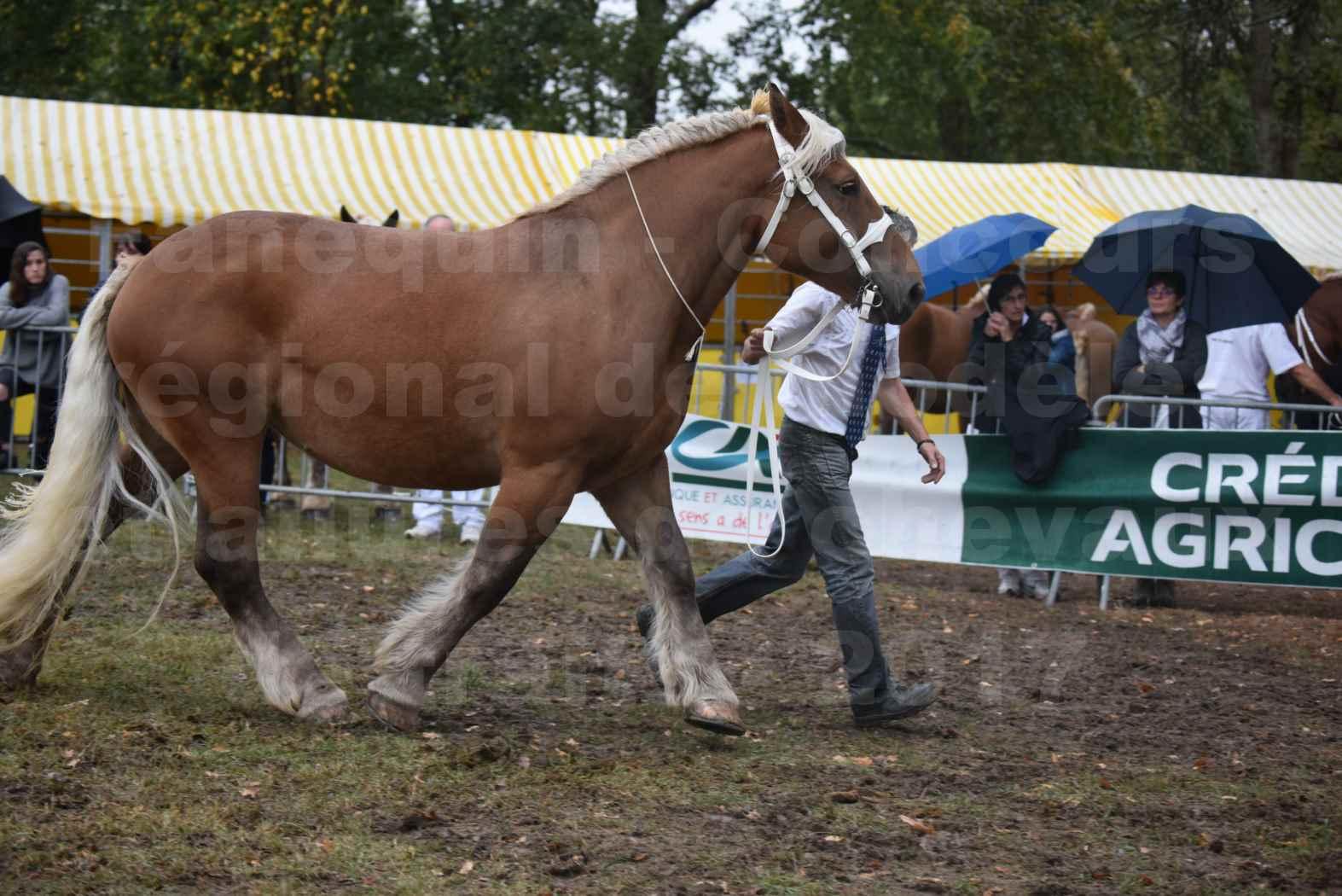 Concours Régional de chevaux de traits en 2017 - Trait COMTOIS - ETAMINE DES MONTANTS - 12