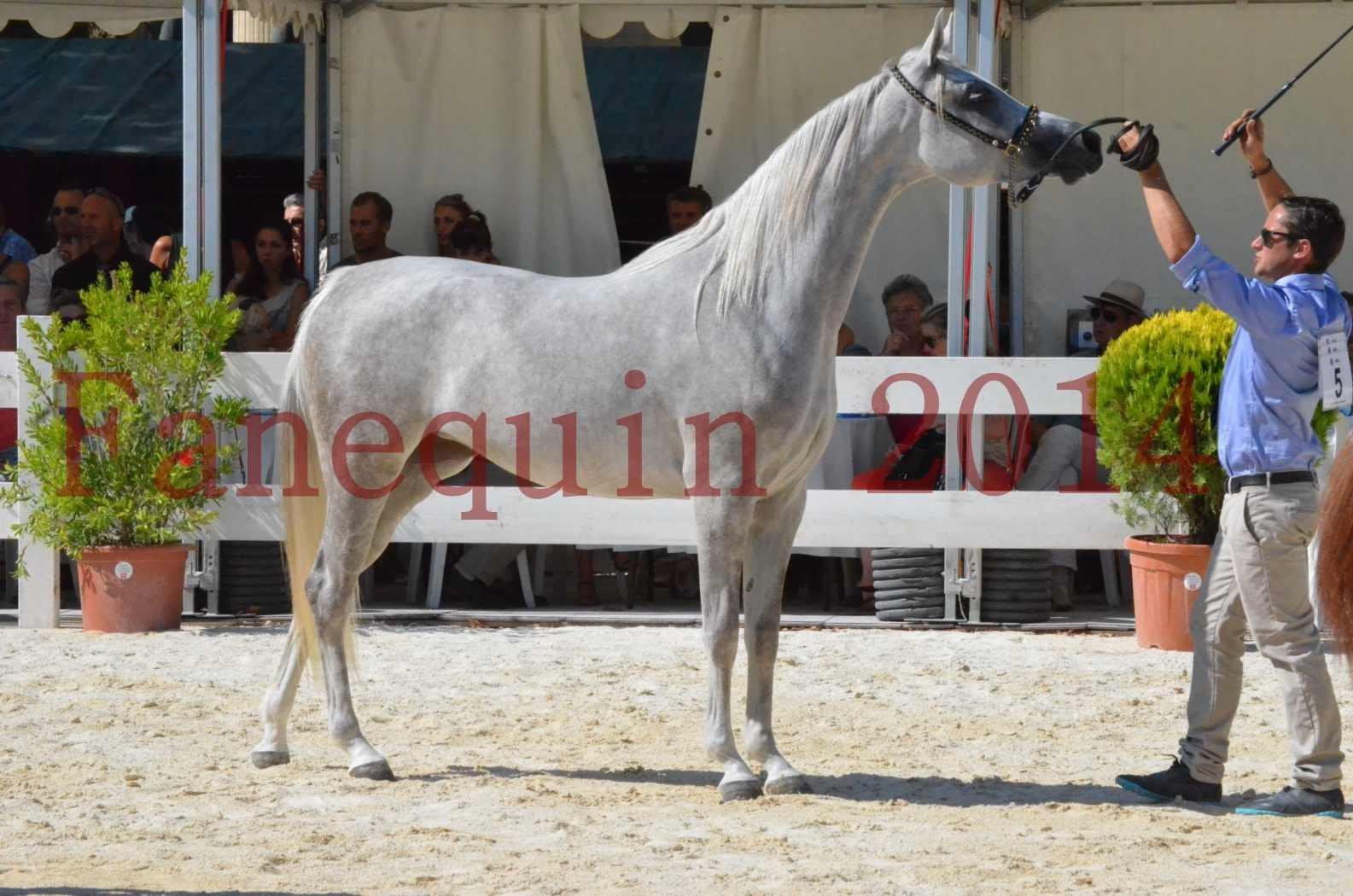 Concours national de Nîmes 2014 - Championnat Femelles Juniors - VOLODIA DE LAFON - 19