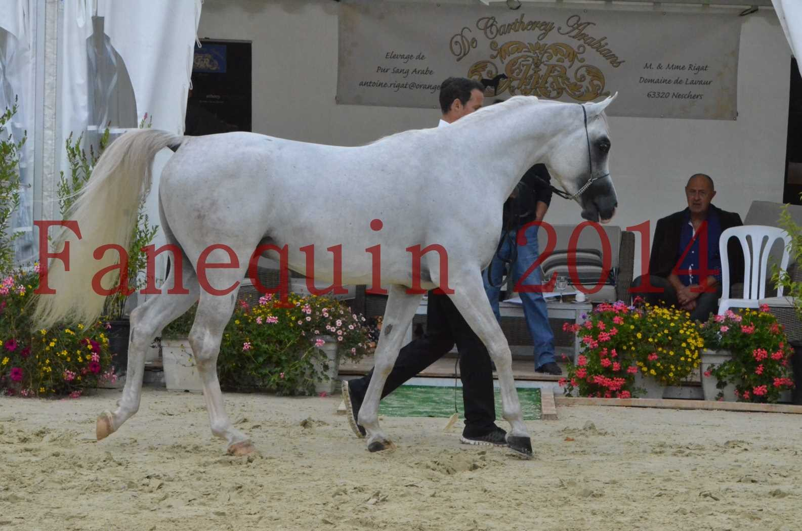 CHAMPIONNAT DE FRANCE 2014 A POMPADOUR - Sélection - FA STARLIGHT - 03