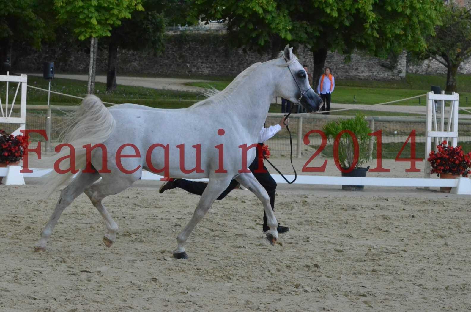 CHAMPIONNAT DE FRANCE 2014 A POMPADOUR - Sélection - FA STARLIGHT - 05