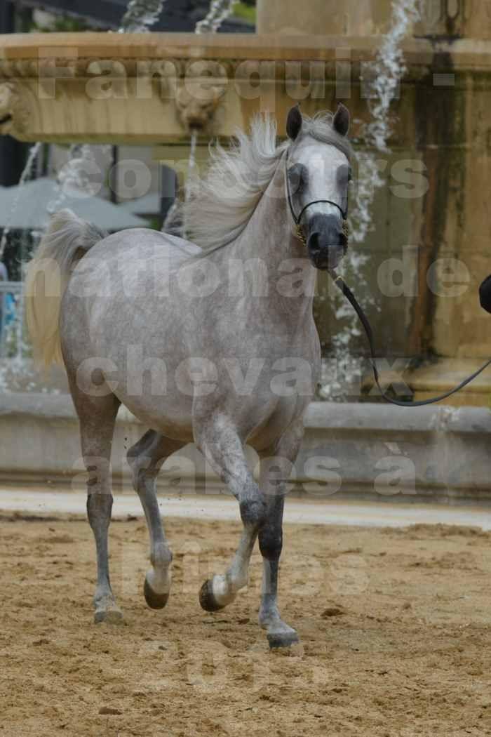 concours National de chevaux Arabes à Nîmes - les 12 & 13 septembre 2015 - 1