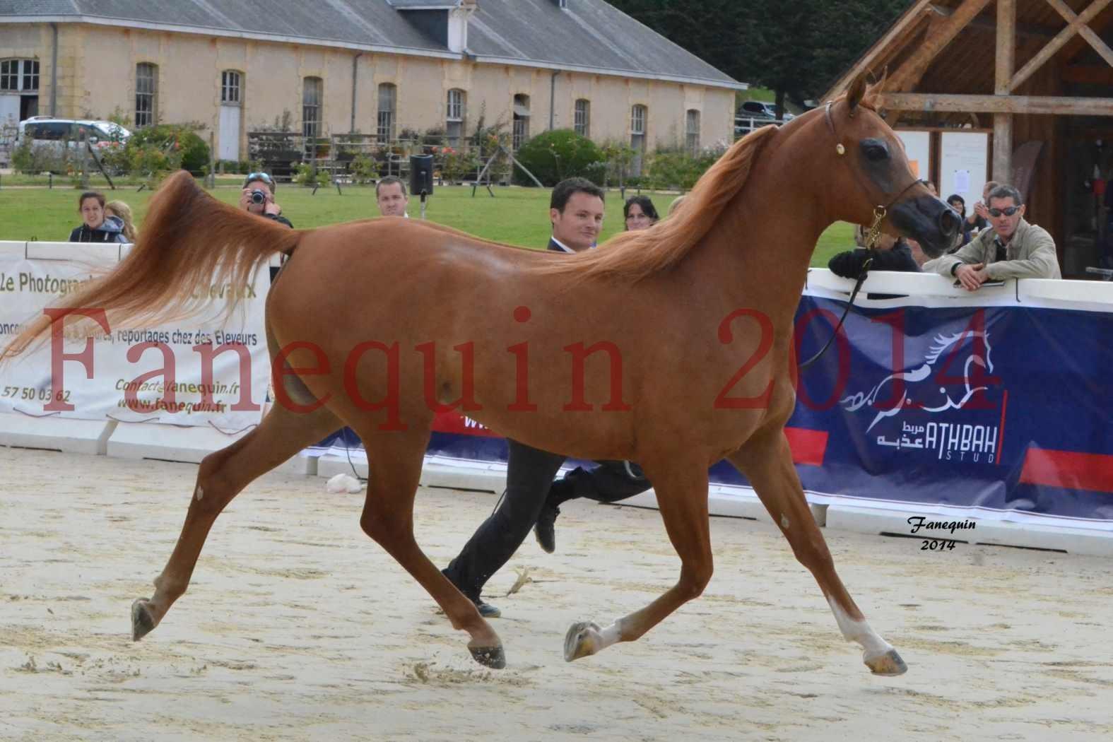 CHAMPIONNAT DE FRANCE 2014 A POMPADOUR - Notre Sélection - LUTFINAH JA - 10
