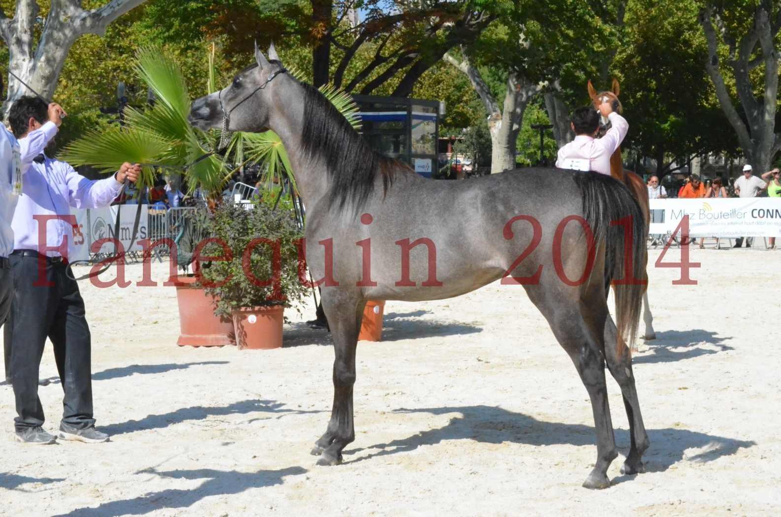 Concours National de Nîmes de chevaux ARABES 2014 - Championnat - JOSEPH'S BOUZIOLS - C 20