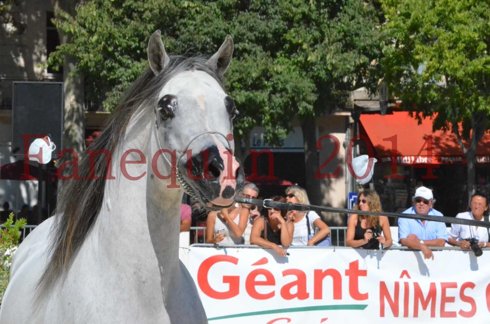 Concours National de Nîmes de chevaux ARABES 2014 - Sélection - SHAOLIN DE NEDJAIA - 14