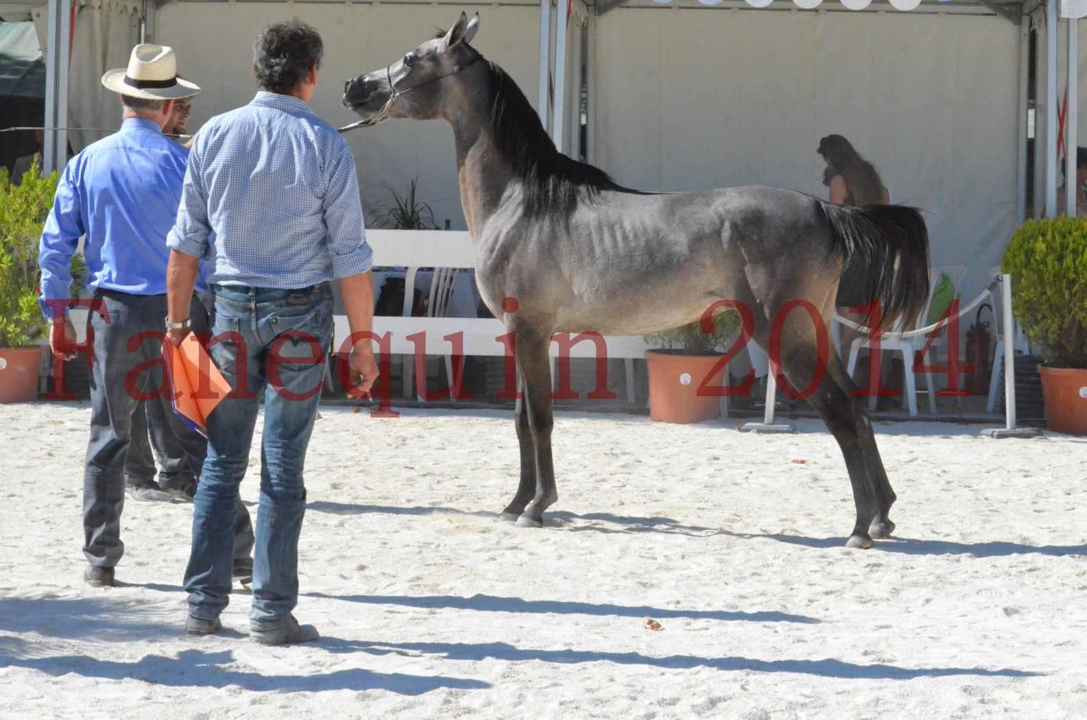 Concours National de Nîmes de chevaux ARABES 2014 - Championnat - JOSEPH'S BOUZIOLS - S 15