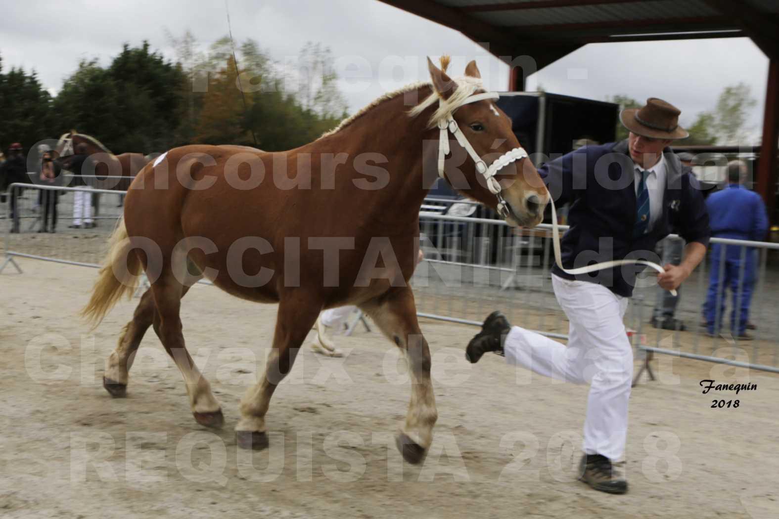 """Concours Régional """"OCCITANIE"""" de Chevaux de Traits à REQUISTA en 2018 - FAUVETTE DES BARDIS - 2"""