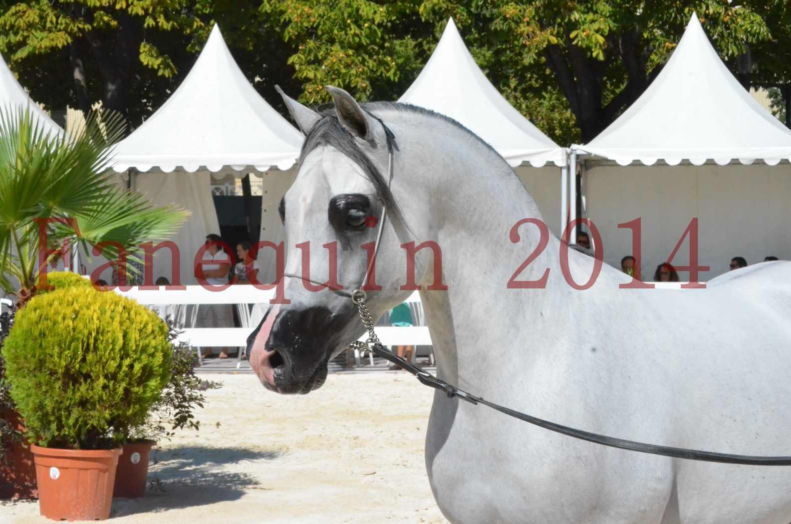 Concours National de Nîmes de chevaux ARABES 2014 - Sélection - SHAOLIN DE NEDJAIA - 15