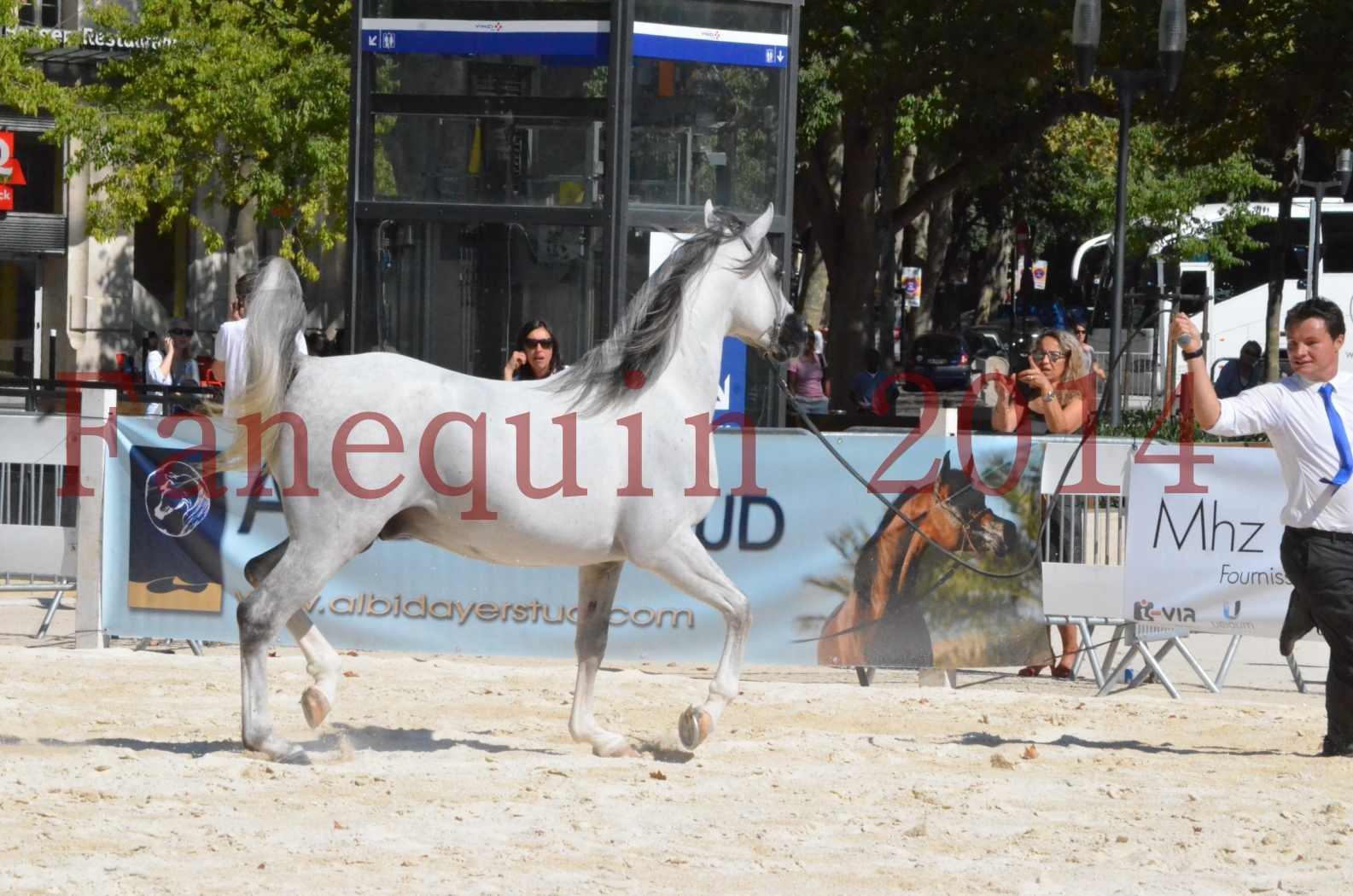 Concours National de Nîmes de chevaux ARABES 2014 - Sélection - SHAOLIN DE NEDJAIA - 26