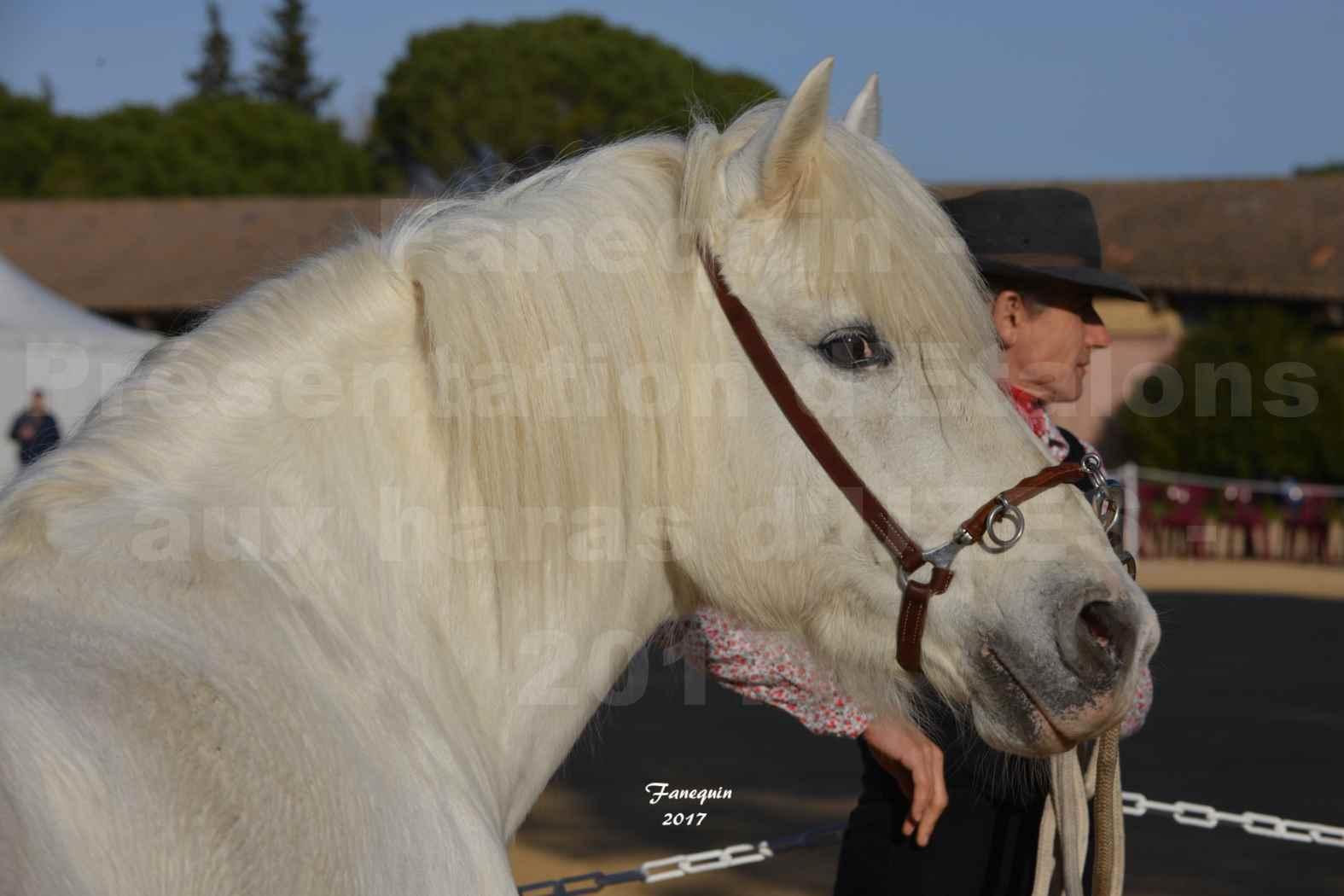 Présentation d'Étalons aux Haras d'UZES en 2016 - Portraits - IOULIER DU RHONY - 1