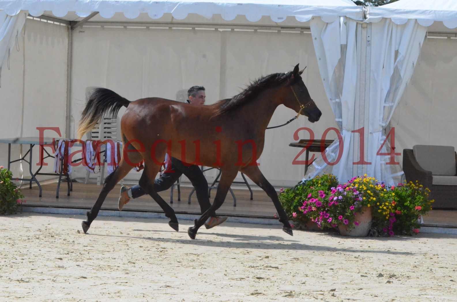 Championnat de FRANCE 2014 - Amateurs - KAL'ELLE D'ELHORIA - 50