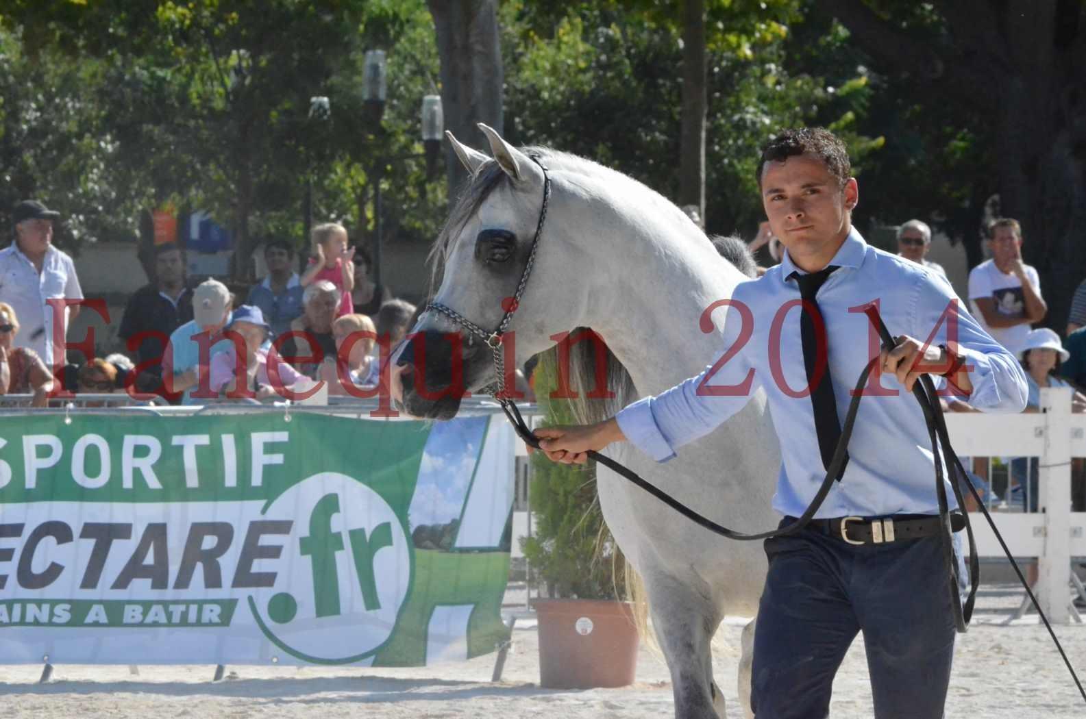 Concours National de Nîmes de chevaux ARABES 2014 - Championnat - SHAOLIN DE NEDJAIA - 45