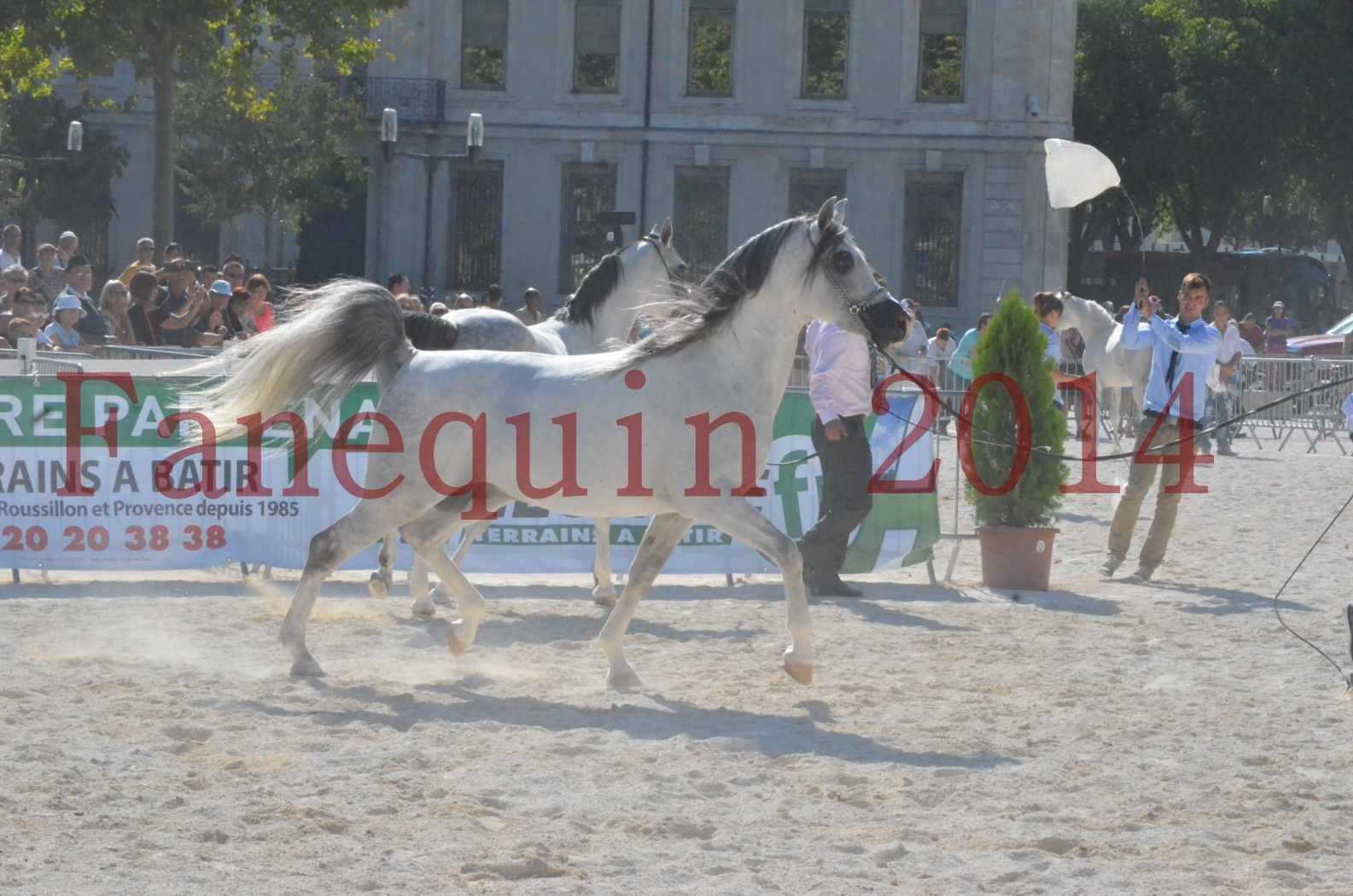Concours National de Nîmes de chevaux ARABES 2014 - Championnat - SHAOLIN DE NEDJAIA - 05
