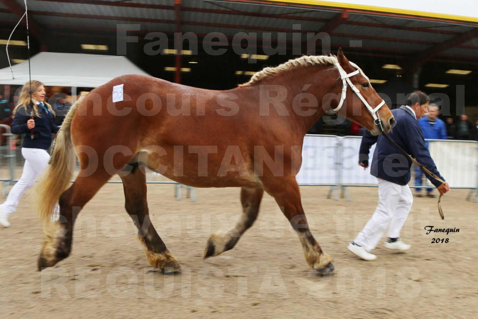Concours Régional OCCITANIE de chevaux de traits à REQUISTA - DIANE DE GRILLOLES - 5