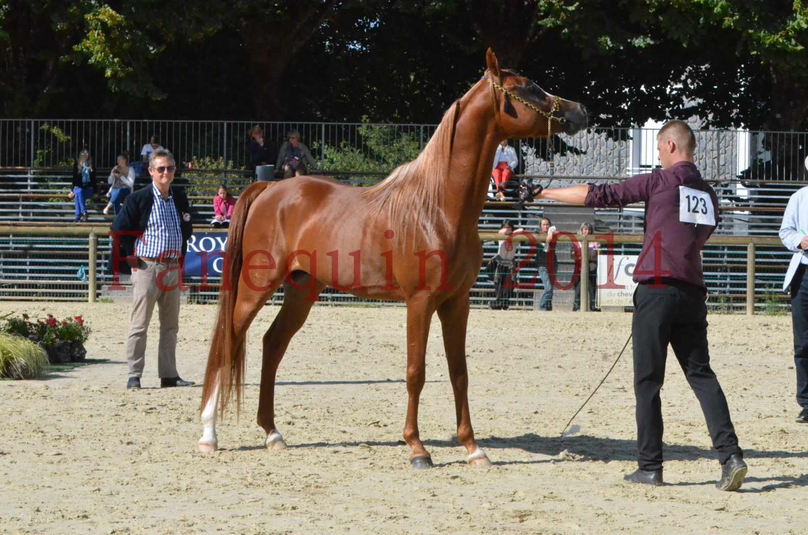 Championnat de FRANCE 2014 - Amateurs - SELECTO IBN SAMAWI - 074