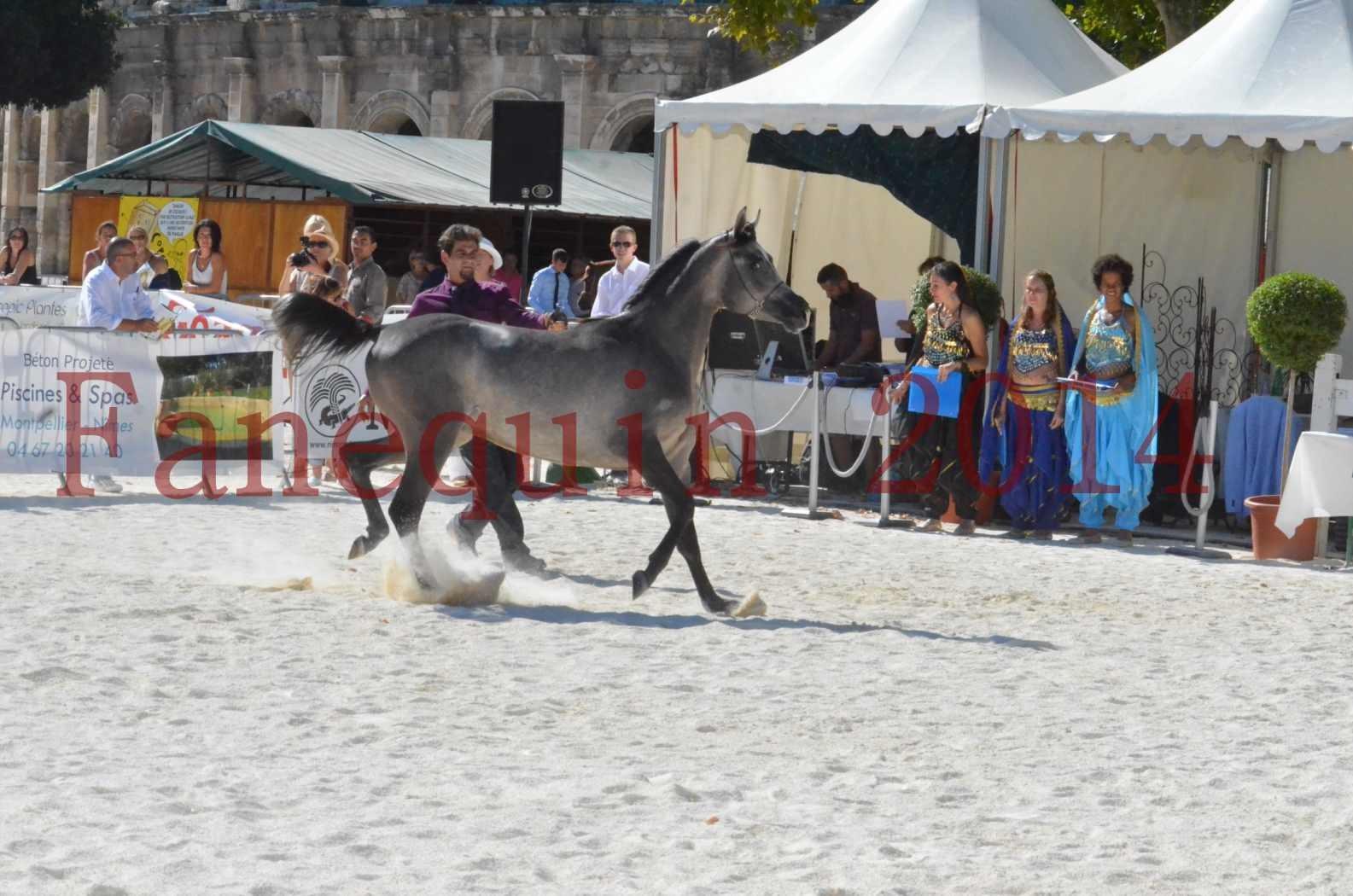 Concours National de Nîmes de chevaux ARABES 2014 - Championnat - JOSEPH'S BOUZIOLS - S 01