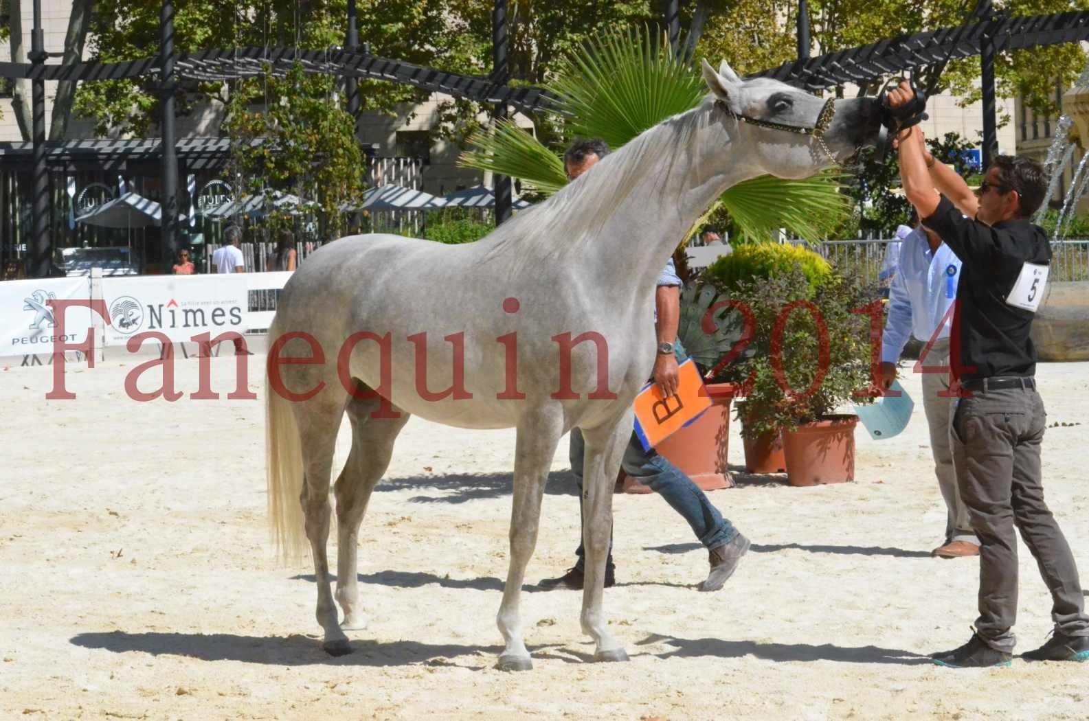 Concours national de Nîmes 2014 - Sélection  - VOLODIA DE LAFON - 29