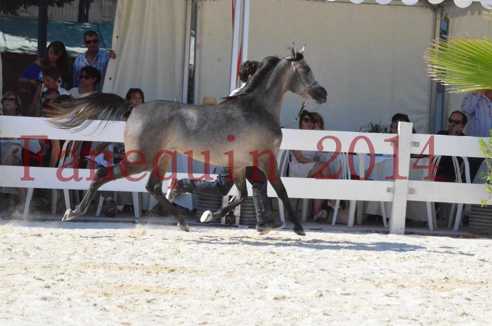 Concours National de Nîmes de chevaux ARABES 2014 - Championnat - JOSEPH'S BOUZIOLS - C 12