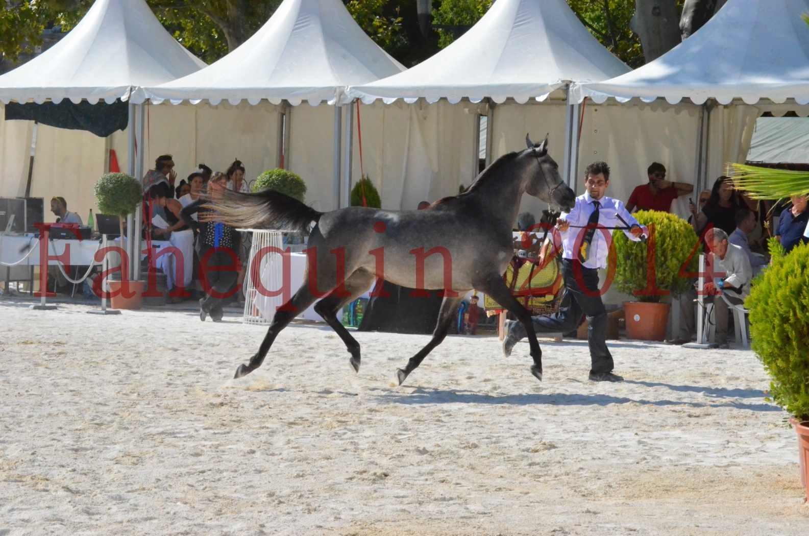 Concours National de Nîmes de chevaux ARABES 2014 - Championnat - JOSEPH'S BOUZIOLS - C 09