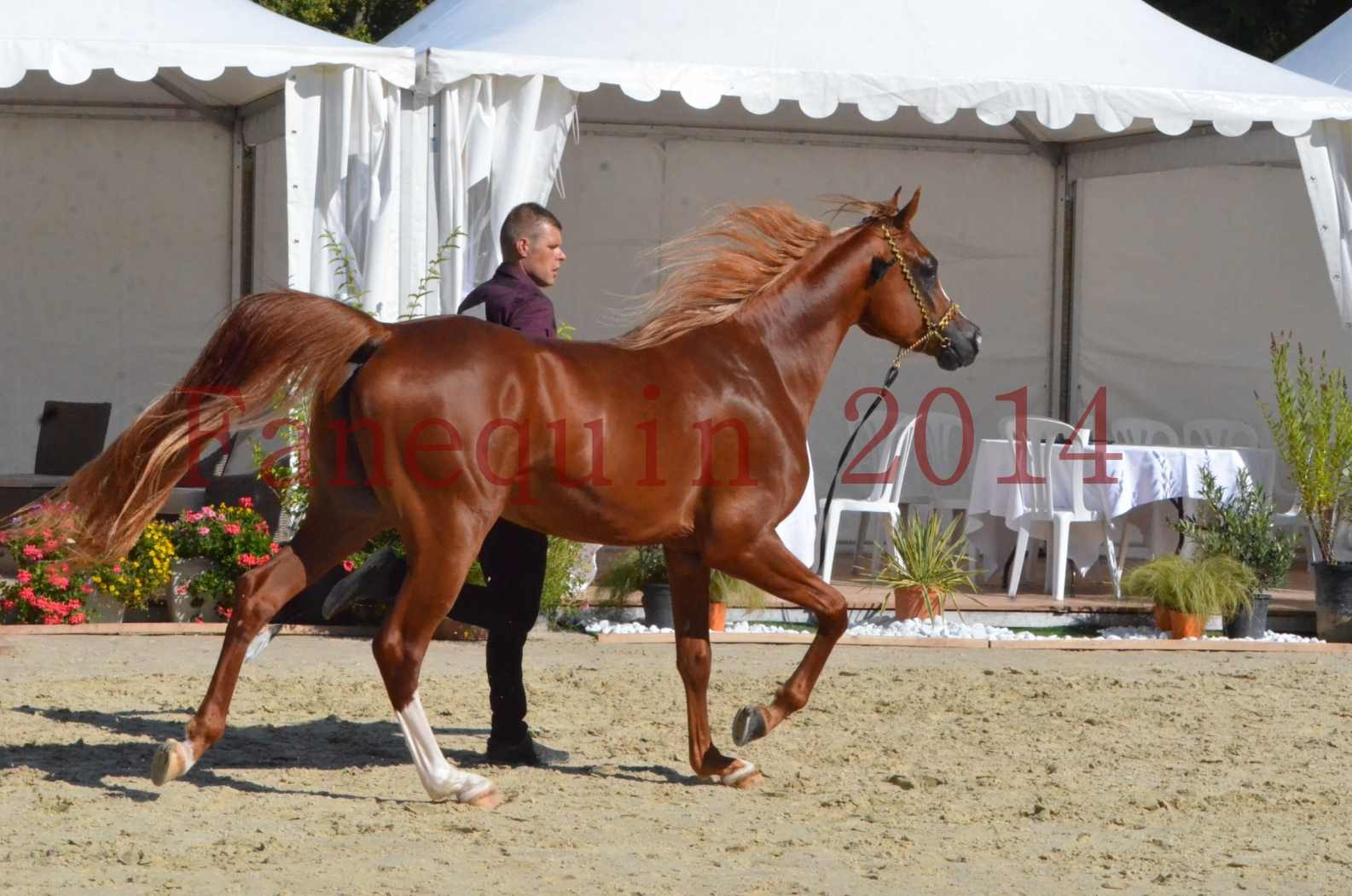 Championnat de FRANCE 2014 - Amateurs - SELECTO IBN SAMAWI - 048