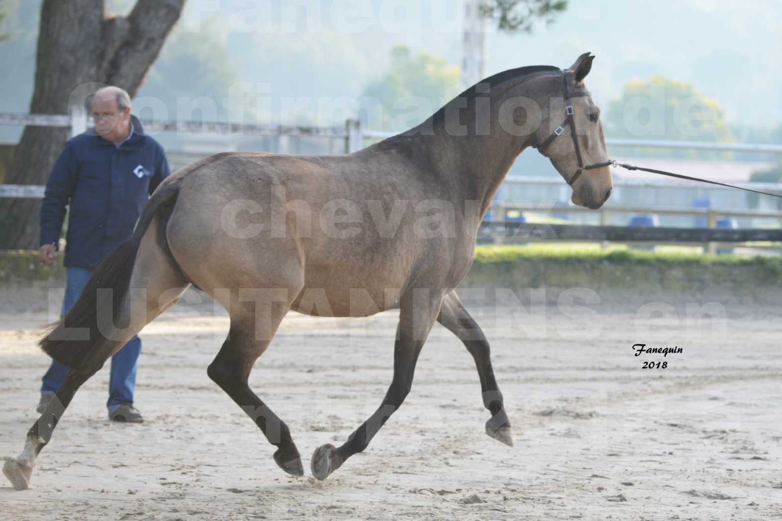 Confirmation de chevaux LUSITANIENS aux Haras d'UZES Novembre 2018 - DISTINTE - 2