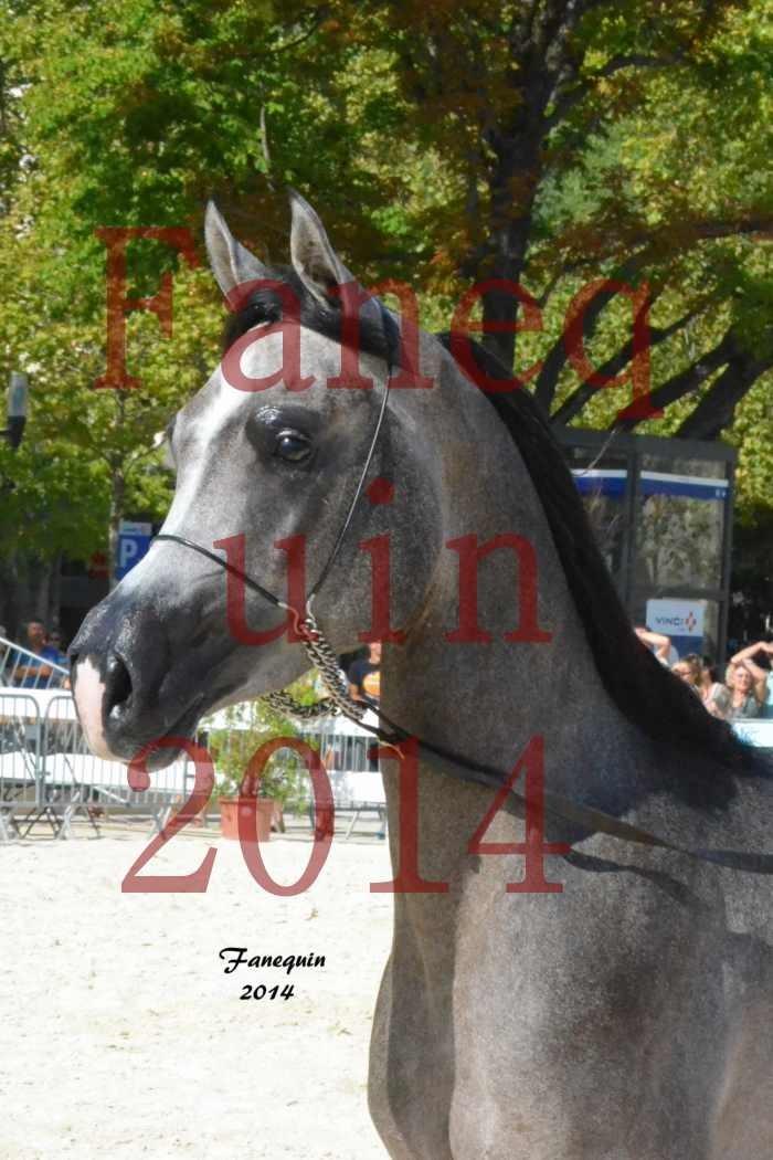 Concours National de Nîmes de chevaux ARABES 2014 - Notre Sélection - Portraits - JOSEPH'S BOUZIOLS - 07