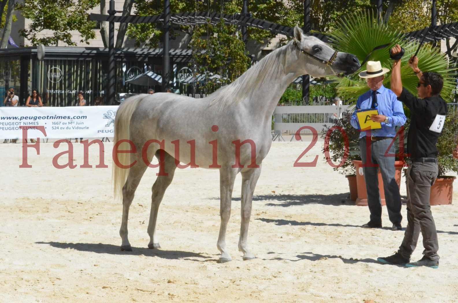 Concours national de Nîmes 2014 - Sélection  - VOLODIA DE LAFON - 21