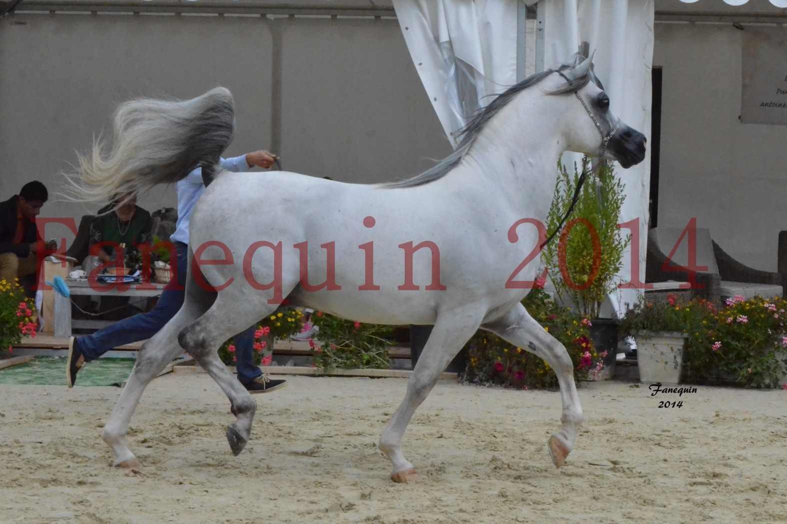 CHAMPIONNAT DE FRANCE  2014 A POMPADOUR - Notre Sélection - SHAOLIN DE NEDJAIA - 20