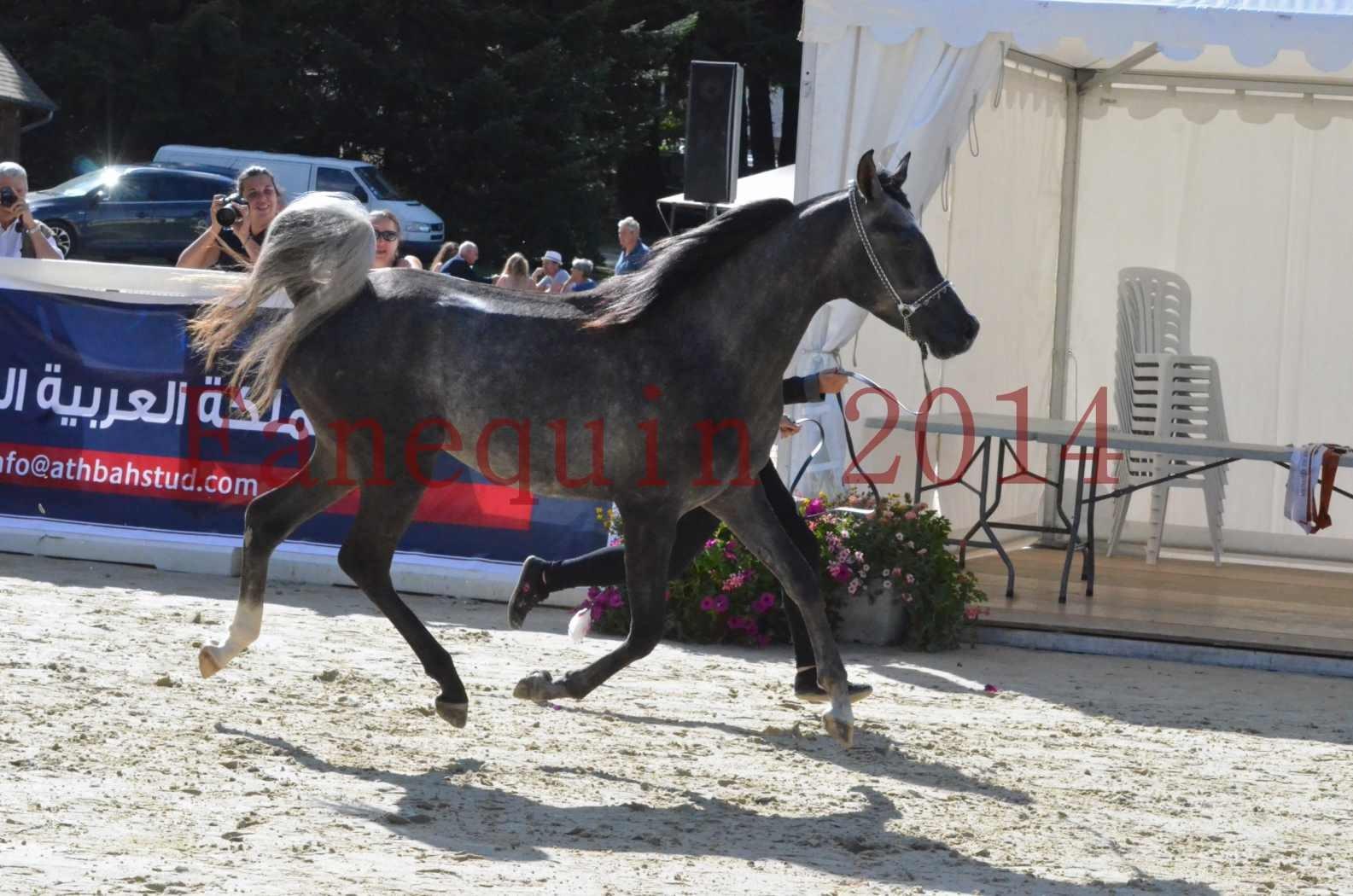 Championnat de FRANCE 2014 - Amateurs - CHTI KAID D'AUBIN - 33