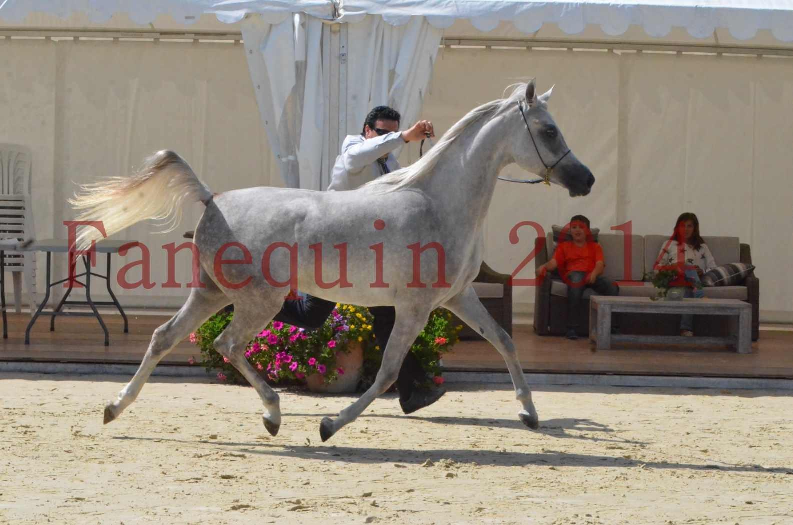Championnat de FRANCE 2014 - Amateurs - VOLODIA DE LAFON - 031