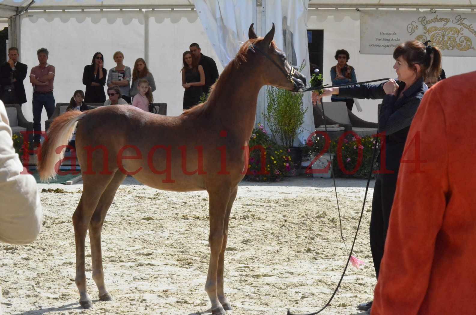 CHAMPIONNAT DE FRANCE 2014 A POMPADOUR - Championnat - TSAR KENZA - 46