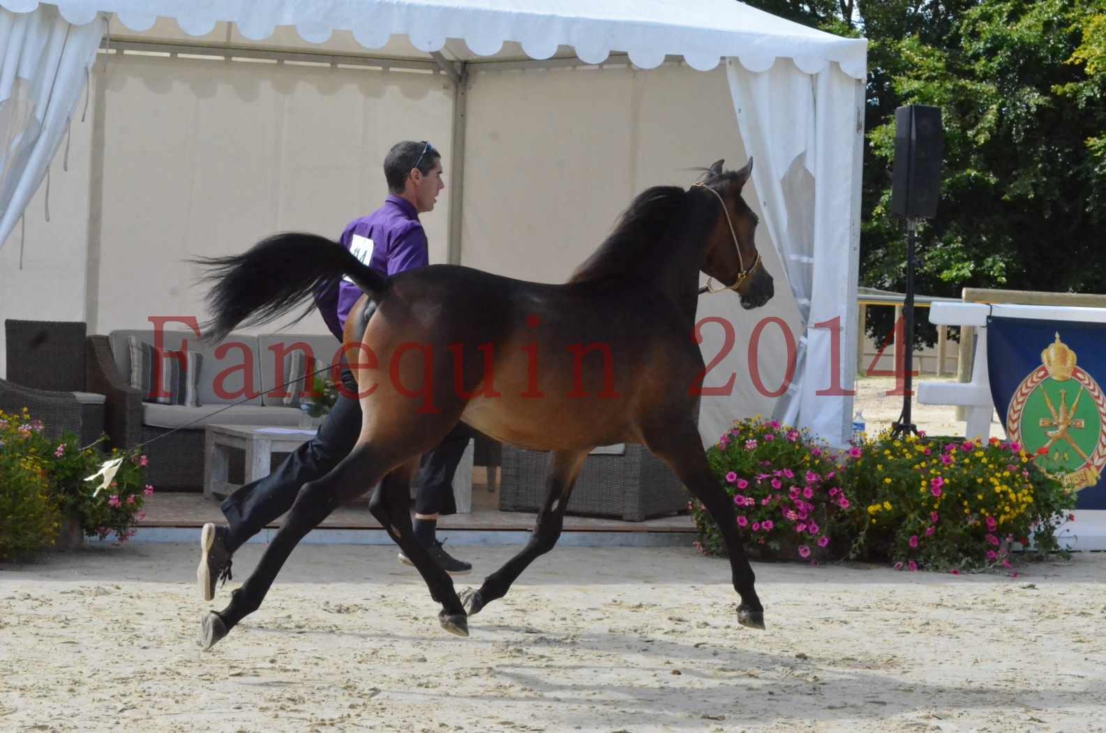 Championnat de FRANCE 2014 - Amateurs - SH FARAJAA - 06