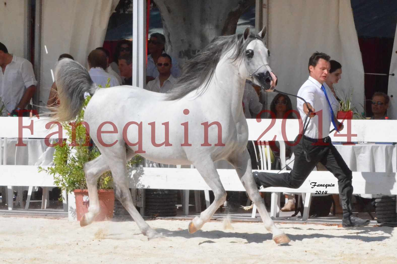 Concours National de Nîmes de chevaux ARABES 2014 - Notre Sélection - SHAOLIN DE NEDJAIA - 01