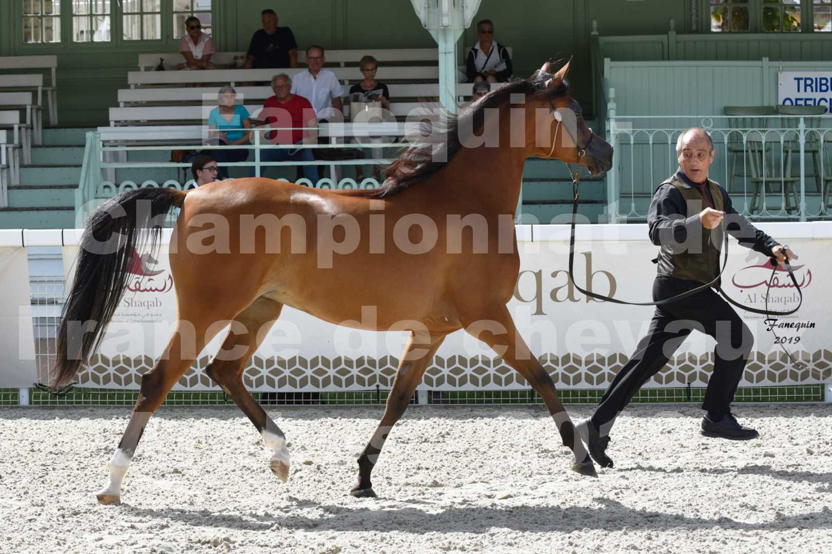 Championnat de France des chevaux Arabes en 2019 à VICHY - SH CHARISMA - 1