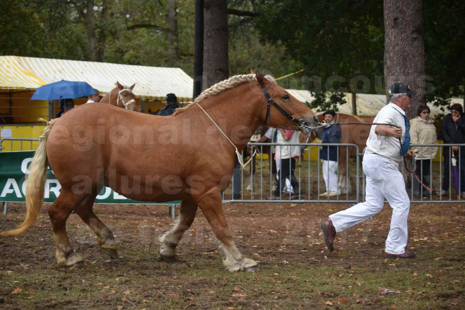 Concours Régional de chevaux de traits en 2017 - Trait COMTOIS  - EGLANTINE DE BENS - 18