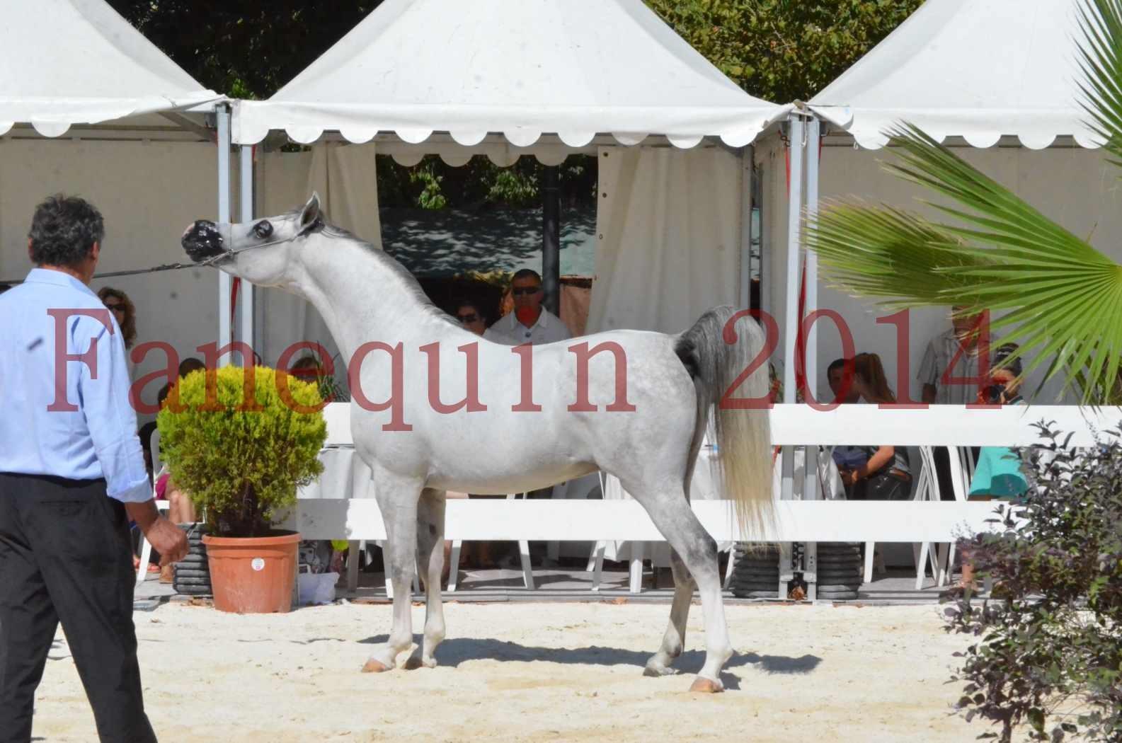 Concours National de Nîmes de chevaux ARABES 2014 - Sélection - SHAOLIN DE NEDJAIA - 69