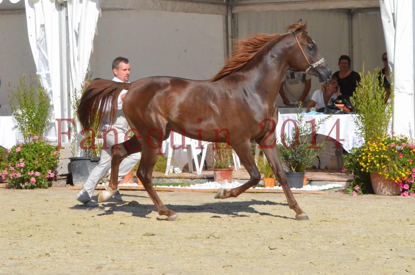 Championnat de FRANCE 2014 - Amateurs - LAMAL - 55