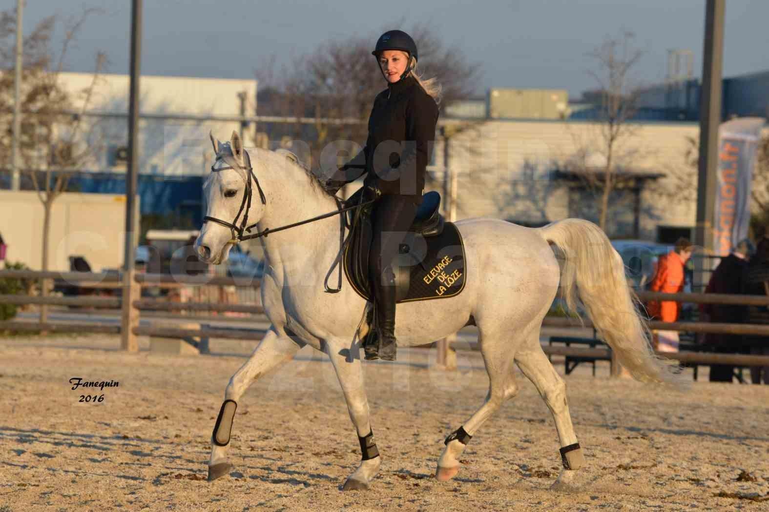 Cheval Passion 2016 - Présentation extérieure de chevaux Arabes montés - 22