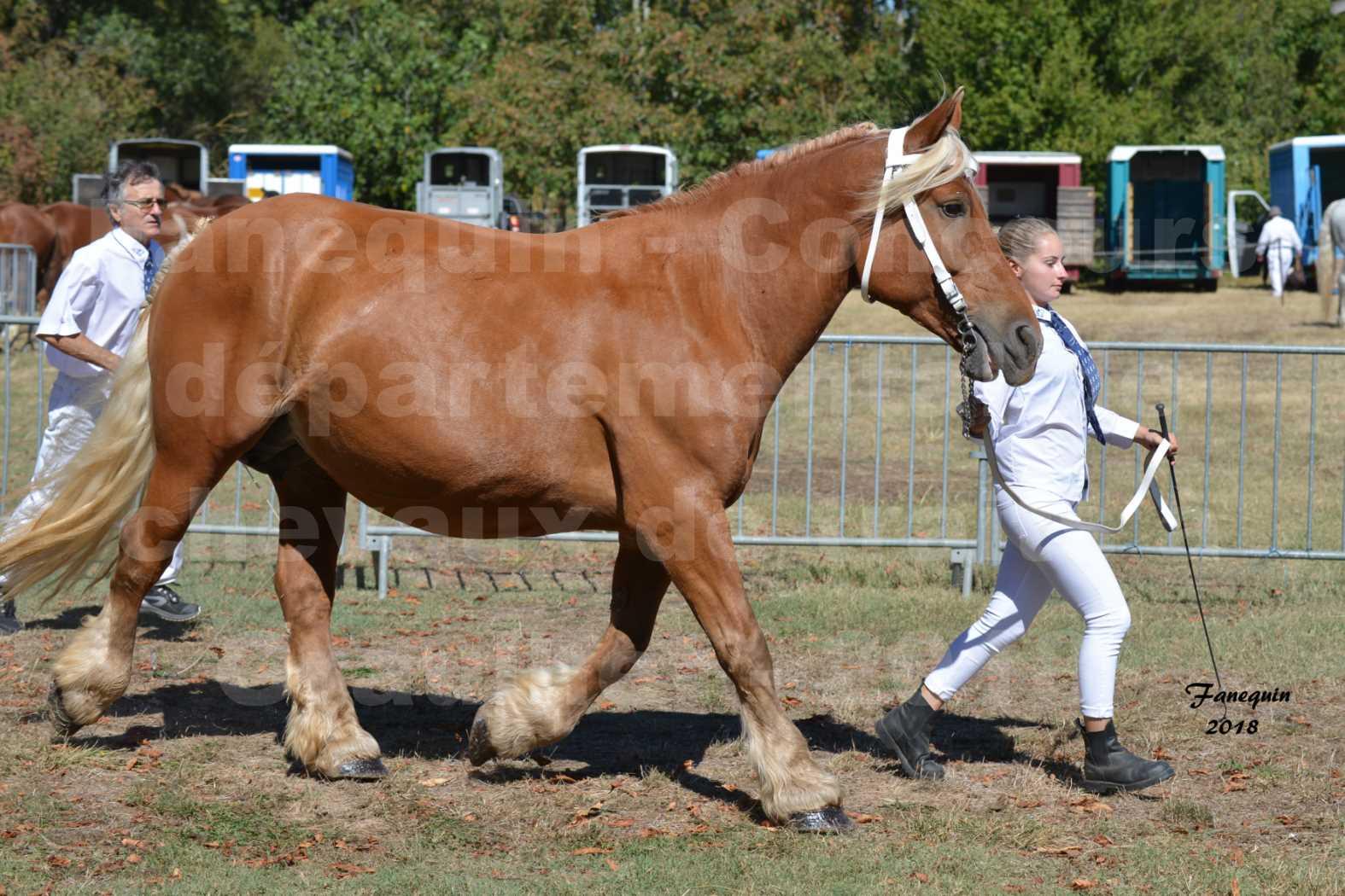 Concours départemental de chevaux de traits à GRAULHET en 2018 - Elevage POUJADE - Notre Sélection - 16