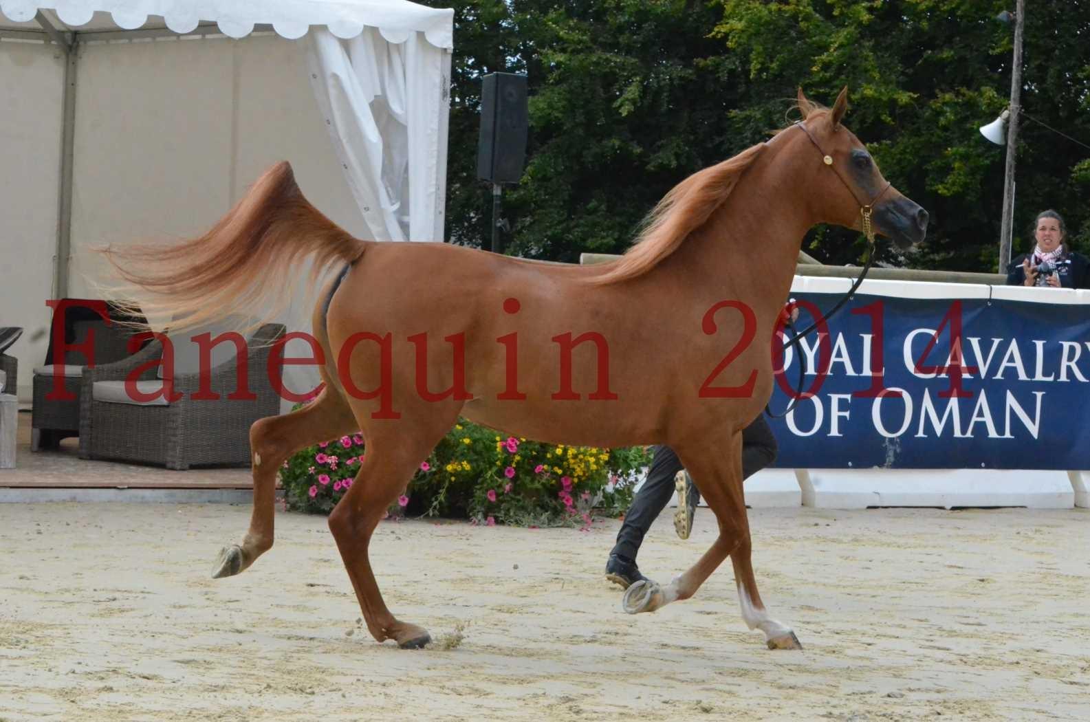 CHAMPIONNAT DE FRANCE 2014 A POMPADOUR - Sélection - LUTFINAH JA - 16