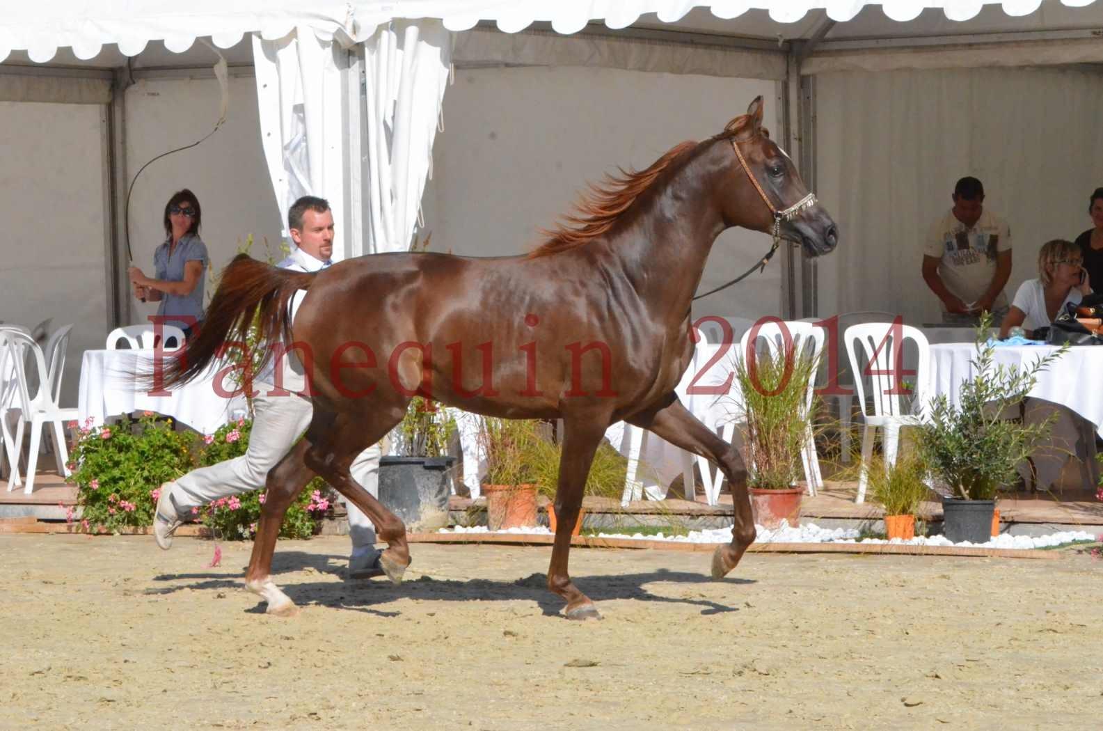 Championnat de FRANCE 2014 - Amateurs - LAMAL - 54