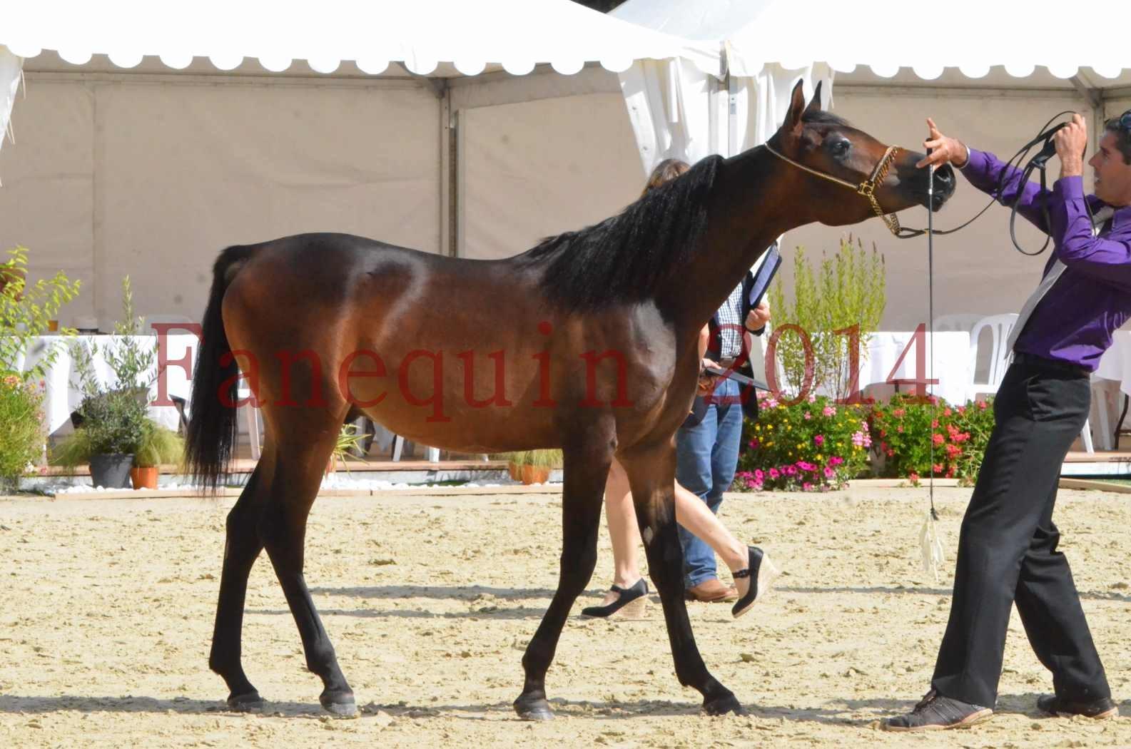 Championnat de FRANCE 2014 - Amateurs - SH FARAJAA - 41
