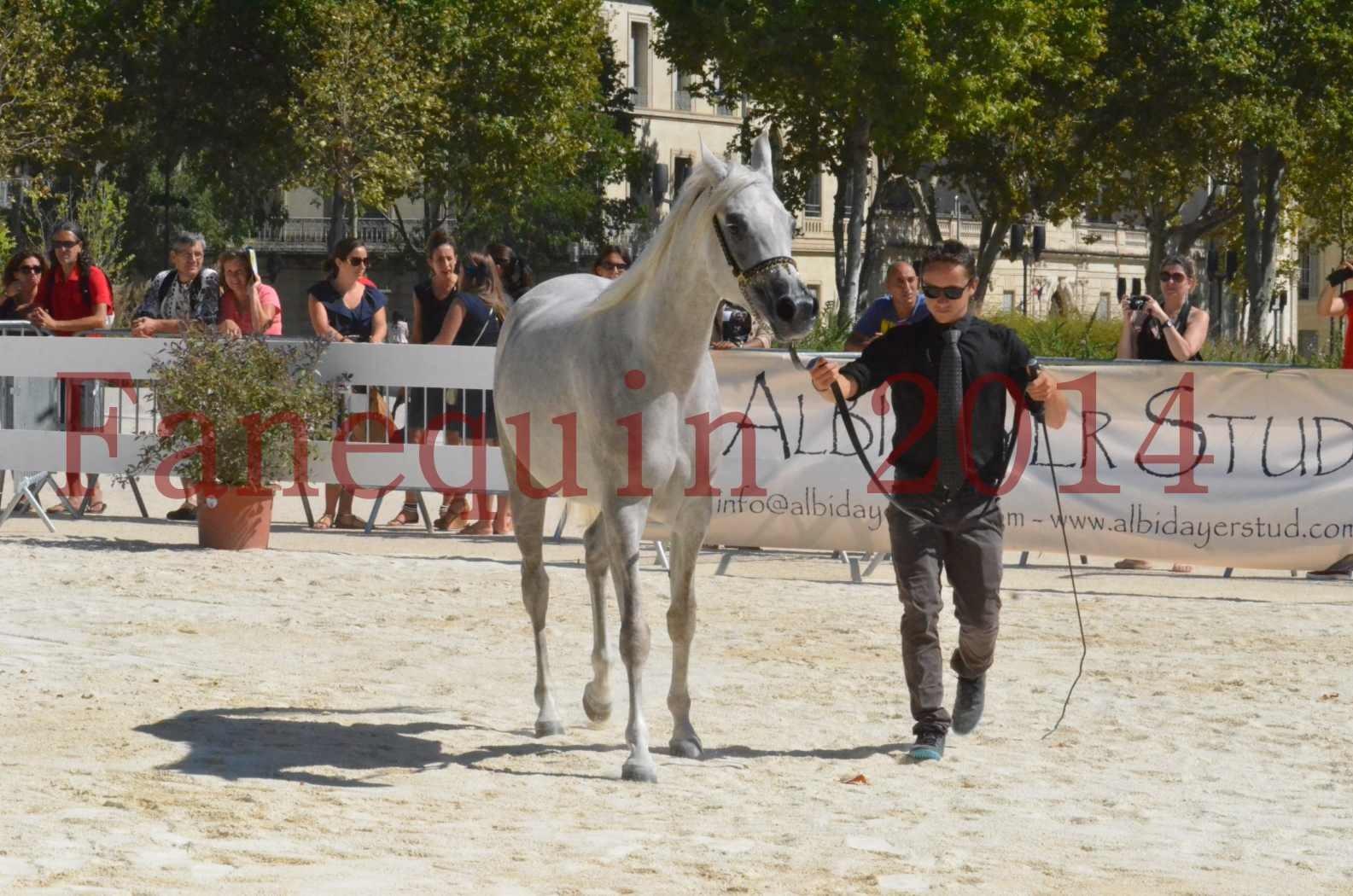 Concours national de Nîmes 2014 - Sélection - VOLODIA DE LAFON - 03